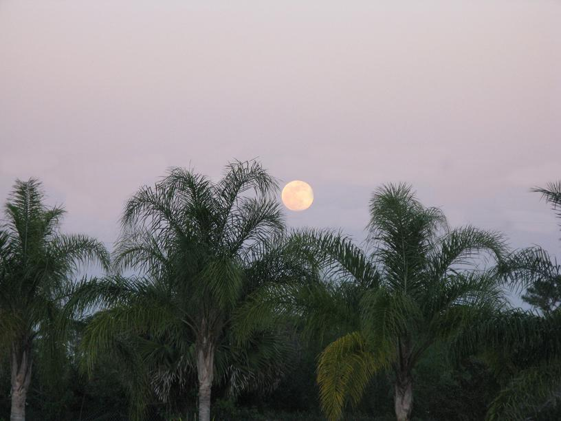 Picture of the Florida Moon